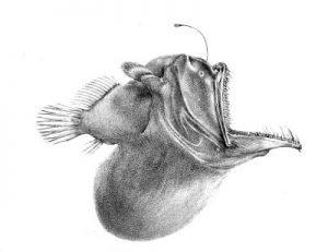 Pesci abissali, creature di un mondo ancora sconosciuto