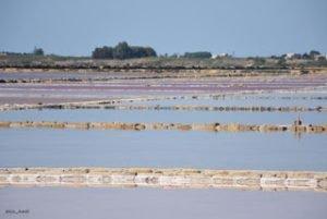 """Un apostrofo rosa fra le parole """"alobacteria"""" e """"alga"""
