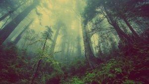 Le piante ci salveranno?