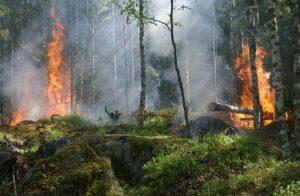 Cosa rimane dopo l'incendio di una foresta