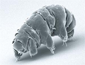 Abbiamo contaminato la Luna con dei tardigradi? Facciamo chiarezza…